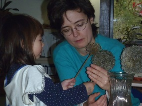 We bring the seed head inside for further exploration.